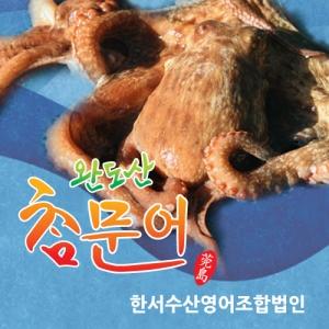 [한서수산] 완도산 참문어 500~800g